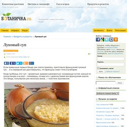 Луковый суп - Ботаничка.ru