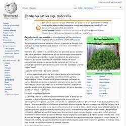 Cannabis sativa ssp. ruderalis