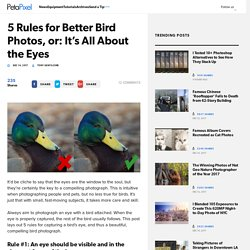 5 Rules for Better Bird Photos, or: It's All About the Eyes