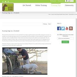 Running Dogs on a Treadmill - Your Dog Guru