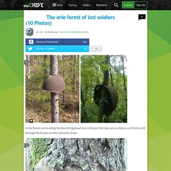 Russian forest grows through abandoned helmets (10 Photos)