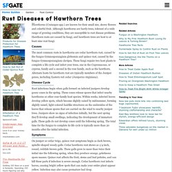 Rust Diseases of Hawthorn Trees