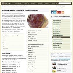 Rutabaga : saison, calendrier et culture du rutabaga