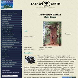 Sacred Earth - Plantprofiles - Oak (Quercus robur)