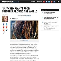 15 sacred plants from cultures around the world