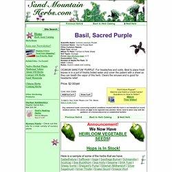 Order Sacred Purple Basil, Ocimum sanctum 'Purple', Herb Seeds