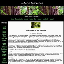 Sacred Trees of the Celts and Druids