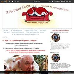 """Le Pape """" ne sacrifions pas d'agneaux à Pâques"""" - Association animale ma-vie-de-galgo"""