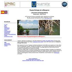 SAE-Mangrove