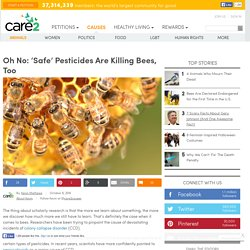 Oh No: 'Safe' Pesticides Are Killing Bees, Too