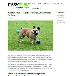 Safety Benefits of Artificial Grass for Dogs