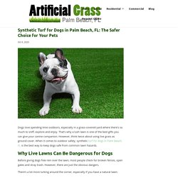 Safety Benefits of Synthetic Turf for Dogs in Palm Beach, FL