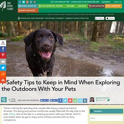 7 Safety Tips to Keep in Mind When Exploring the Outdoors With Your Pets