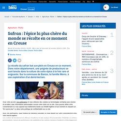 FRANCE BLEU 15/10/19 Safran : l'épice la plus chère du monde se récolte en ce moment en Creuse
