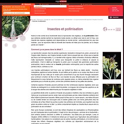 Insectes et pollinisation