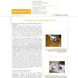 CNRS, Sagascience - Les robots qui imitent la vie
