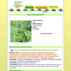 Sage Herb Benefits