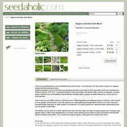 Sagina subulata 'Irish Moss' Seeds