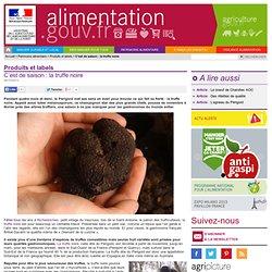 ALIMENTATION_GOUV_FR 30/10/13 C'est de saison : la truffe noire