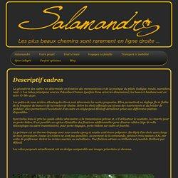 Salamandre Cycles