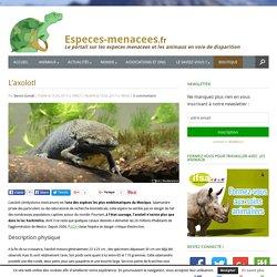 L'axolotl - Ambystoma mexicanum - Une salamandre menacée d'extinction