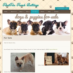 FleetFire French Bulldogs