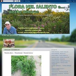 Reseda alba L. - Resedaceae - Reseda bianca