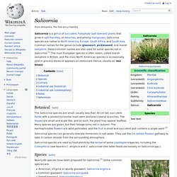 Salicornia - Wikipedia, the free encyclopedia - (Build 201004010