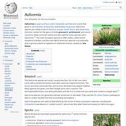 Salicornia - Wikipedia, the free encyclopedia - (Build 201004010