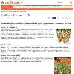 Salsifis : semis, culture et récolte