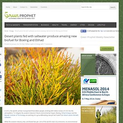 Desert plants fed with saltwater produce amazing new biofuel for Boeing and Etihad