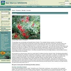 San Marcos Growers >Grevillea