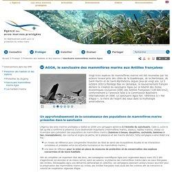 Sanctuaire mammifères marins Agoa - Protection des habitats et des espèces - Protéger