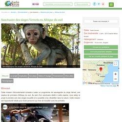 Sanctuaire des singes Vervets en Afrique du sud