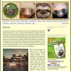 The Sloth Sanctuary history and beginnings of sloth rescue in Costa Rica. — Sloth Sanctuary of Costa Rica