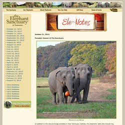 The Elephant Sanctuary : Hohenwald Tennessee