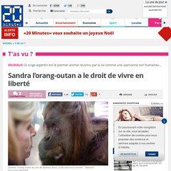 Sandra l'orang-outan a le droit de vivre en liberté