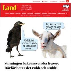 Sanningen bakom svenska fraser: Därför heter det rubb och stubb!