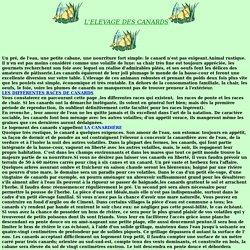 L'ELEVAGE DES CANARDS