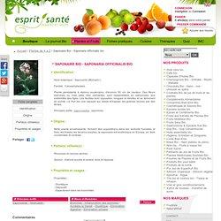 Saponaire Bio - Saponaria officinalis bio