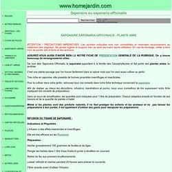 PLANTES AMIES - SAPONAIRE ou SAPONARIA OFFICINALIS