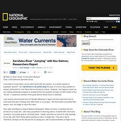 "Sarufutsu River ""Jumping"" with Itou Salmon, Researchers Report"