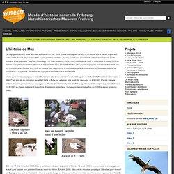 MHN:Suivi satellitaire de la Cigogne blanche Max