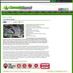 Lao Sativa Marijuana Strain