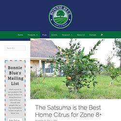 The Satsuma is the Best Home Citrus for Zone 8+ - Bonnie Blue Farms and Nursery