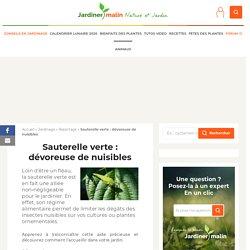 Sauterelle verte : auxiliaire de protection du jardin