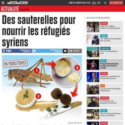 Des sauterelles pour nourrir les réfugiés syriens