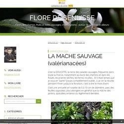 LA MACHE SAUVAGE (valérianacées) - FLORE DE SENLISSE