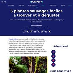 5 plantes sauvages faciles à trouver et à déguster