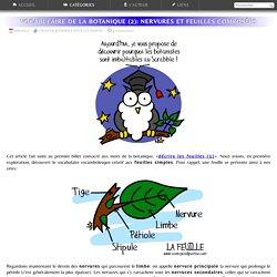 Sauvages du Poitou - Le vocabulaire de la botanique: décrire les feuilles (2)
